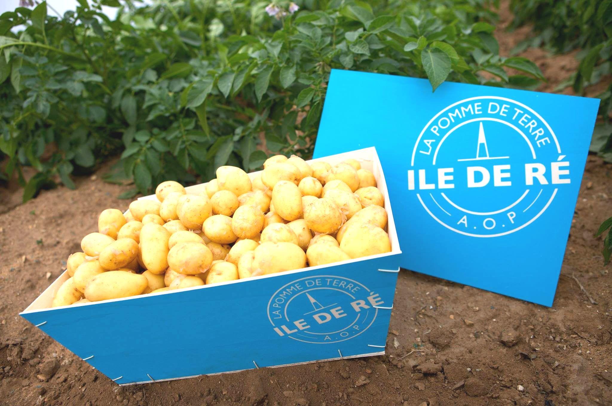 Ile de Ré potato