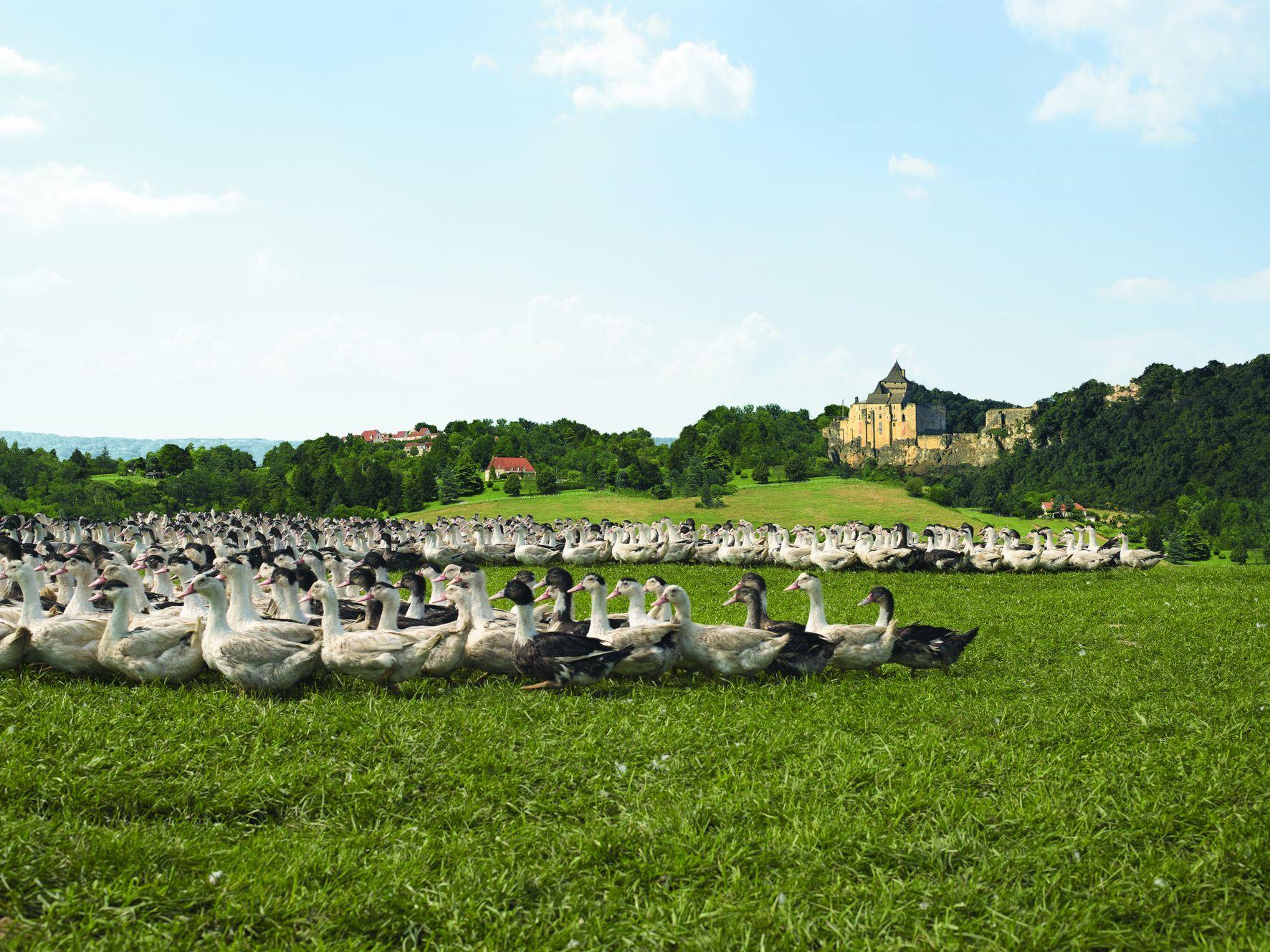 Canard à Foie Gras du Sud-Ouest