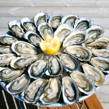 Hossegor Oysters