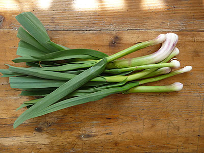 Aillet green garlic