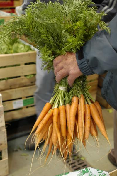 'Carotte de Jarnac-Champagne' carrots