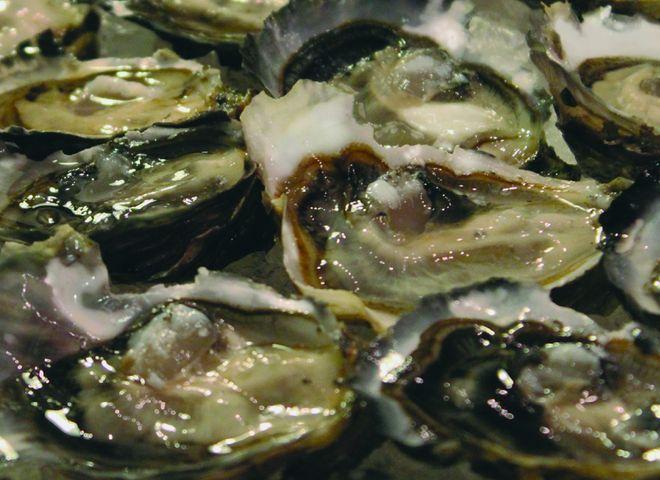 Salt Marsh Oysters from the Ile de Ré