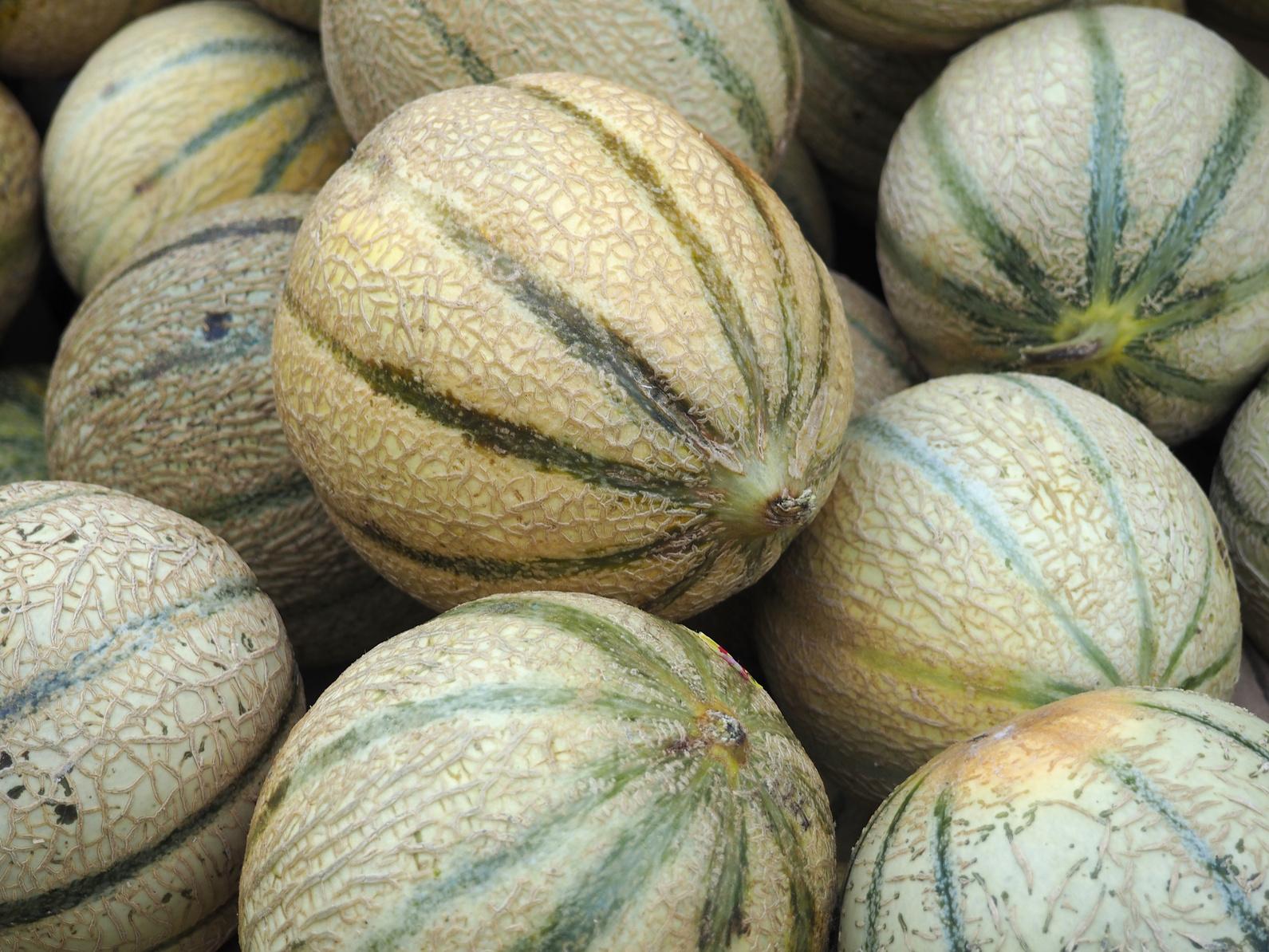 Melon de Lectoure Nérac