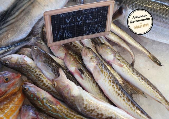 Le marché aux poissons de Capbreton