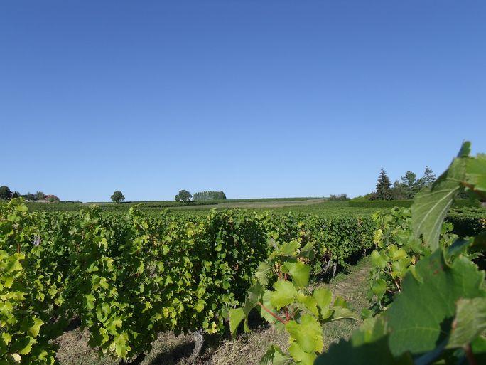 Haut-Poitou